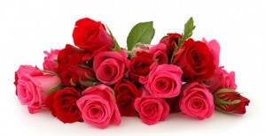 Roses-e1328895048887