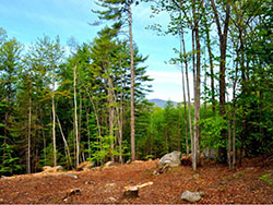 Vista View Rd Cranmore Birches North Conway NH