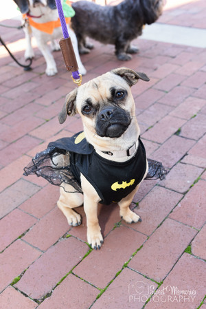 Dogs Dressed For Halloween in Reston