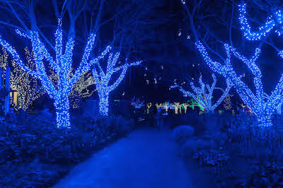 Meadowlark Gardens Winter Walk of Lights