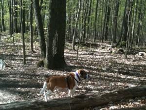 walking trails of Reston