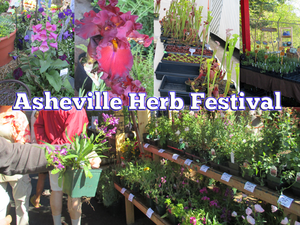 Asheville Herb Festival - Town and Mountian Realty - Asheville