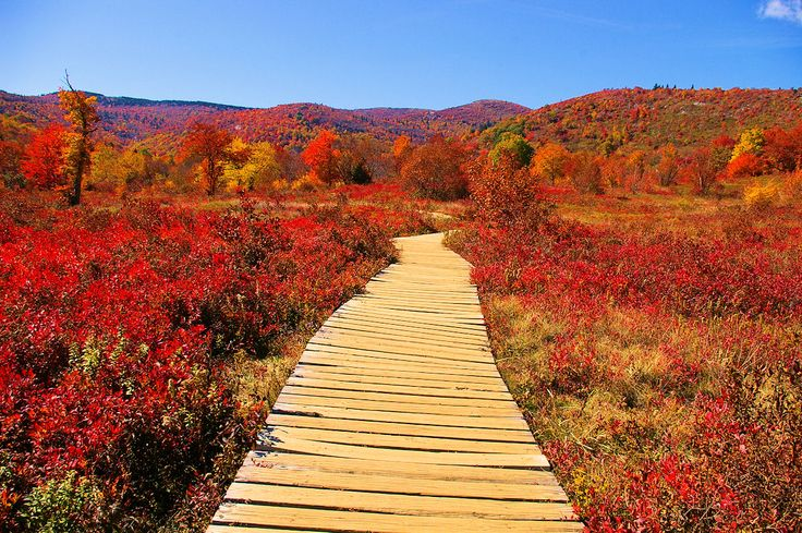 asheville fall foliage best places to look town and mountain realty