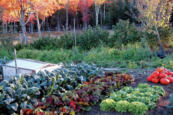 Start now for your best fall garden and harvest broccoli, carrots, kale, lettuces, spinach and more for your holiday feasts.