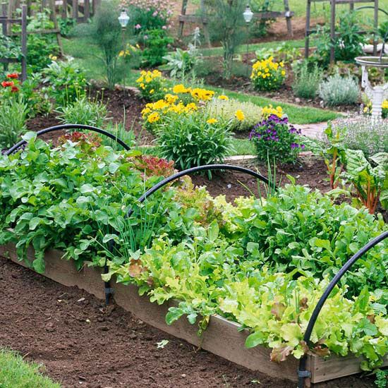 Fall Vegetable Gardening: Autumn's mild temperatures create perfect growing conditions for cool-season crops such as lettuce and spinach. | BHG.com