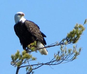 Bald Eagle's Preferred Vantage Point is a New Winnipesaukee Real Estate Listing