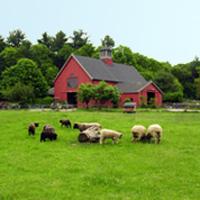 drumlin-farm