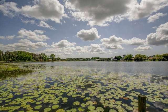 Odessa - wetlands