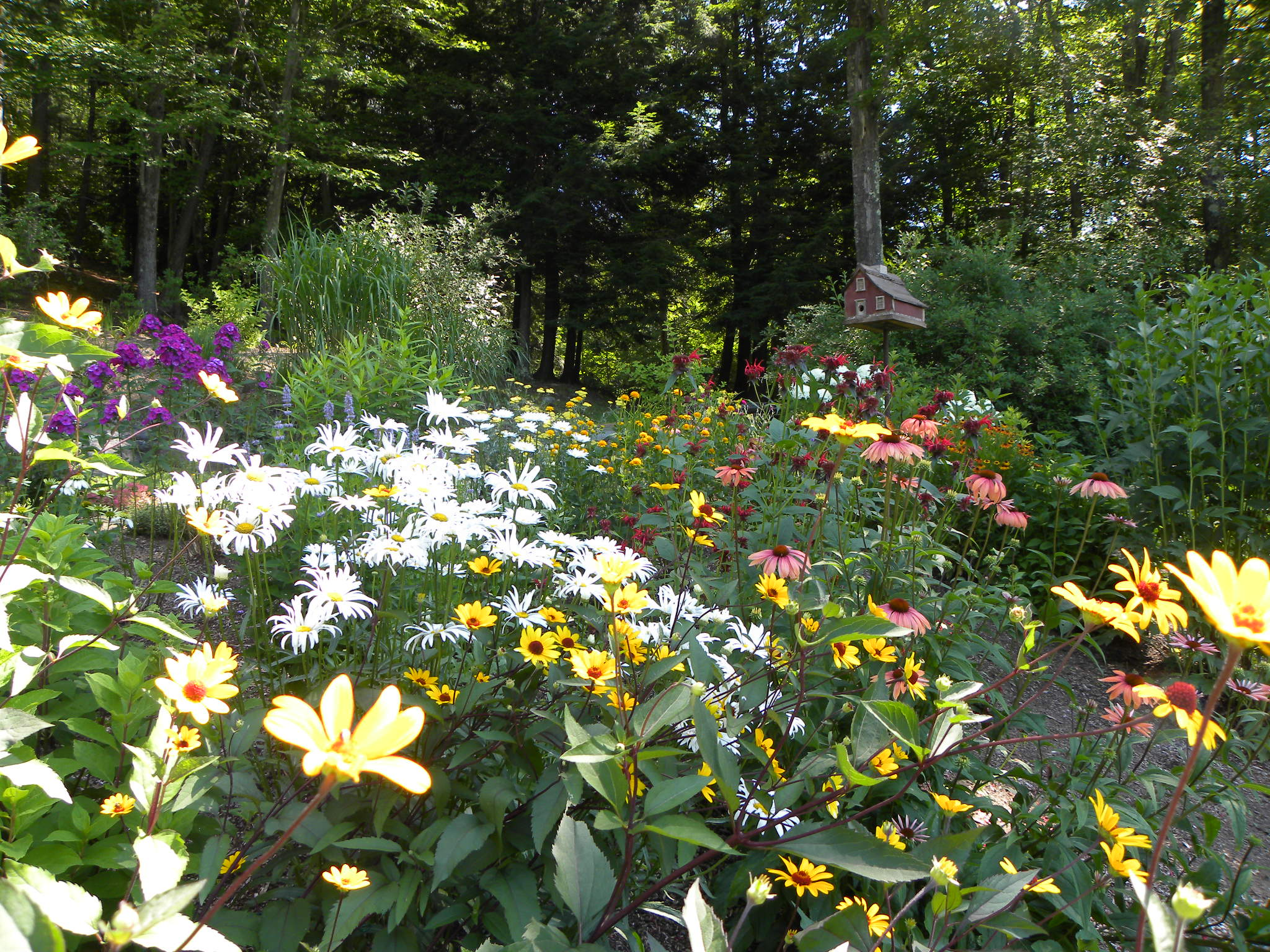 Western Mass Garden Flowers New England