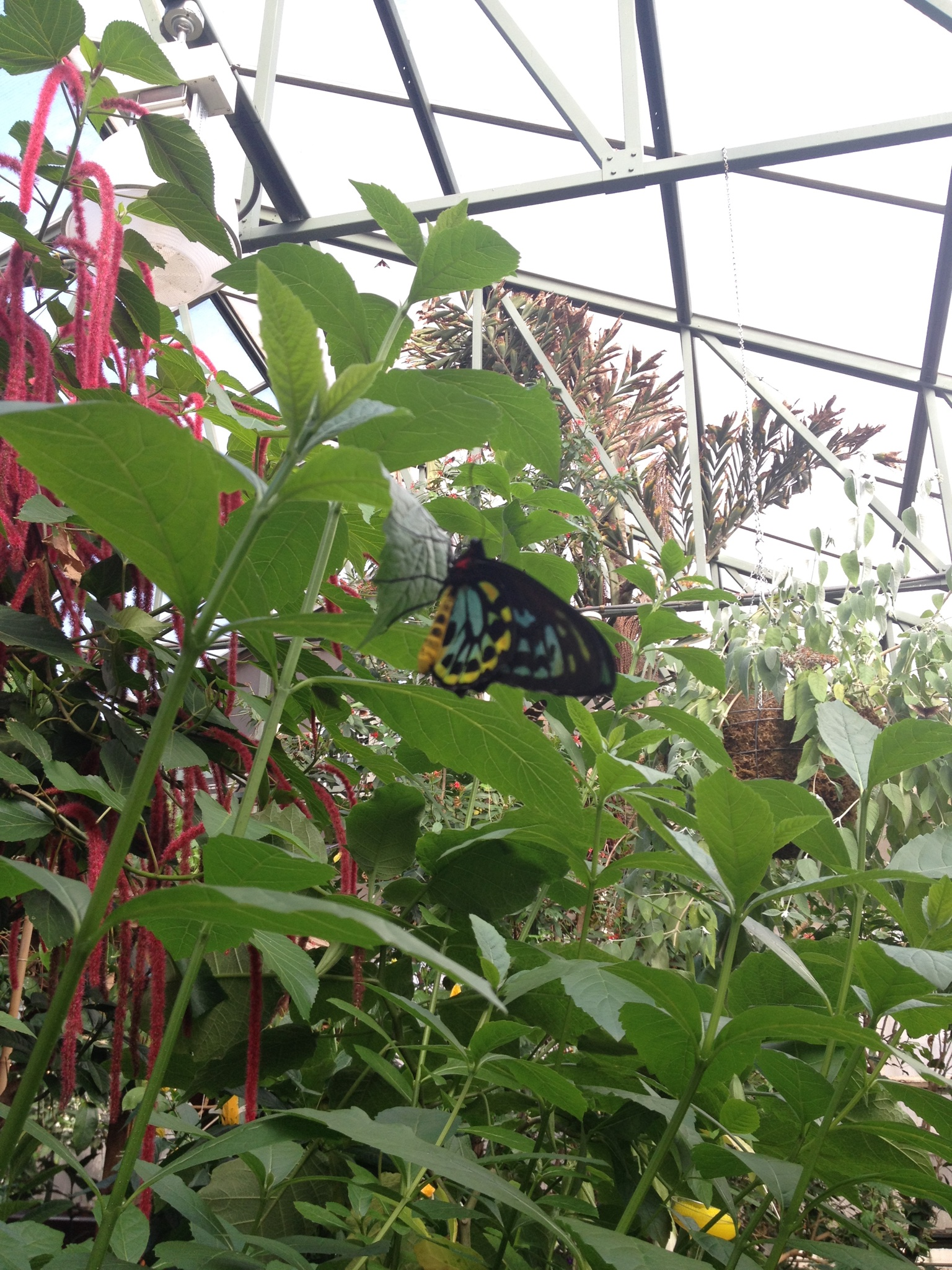 Magic Wings Butterfly Conservatory South Deerfield