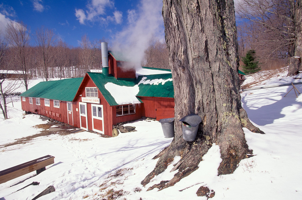 Maple syrup sugar house Massachusetts