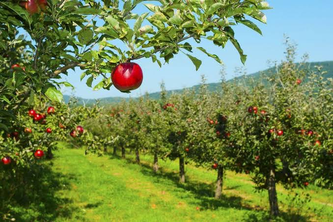 Apple pick-your-own massachusetts franklin county
