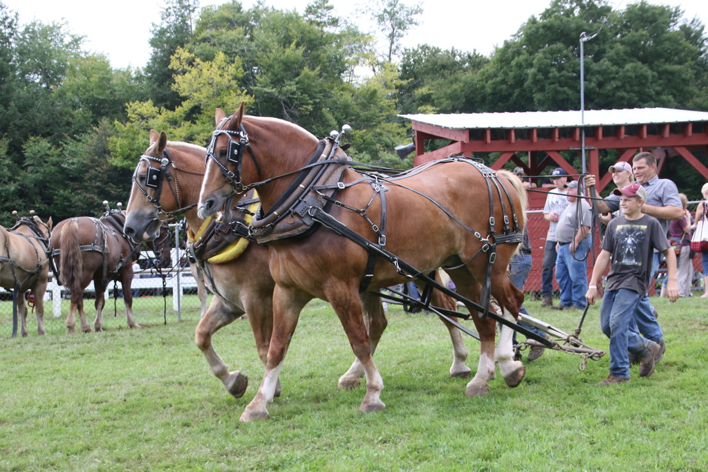 horse pull heath agricultural fair