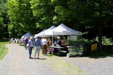 Lavendar Festival Buckland Massachusetts