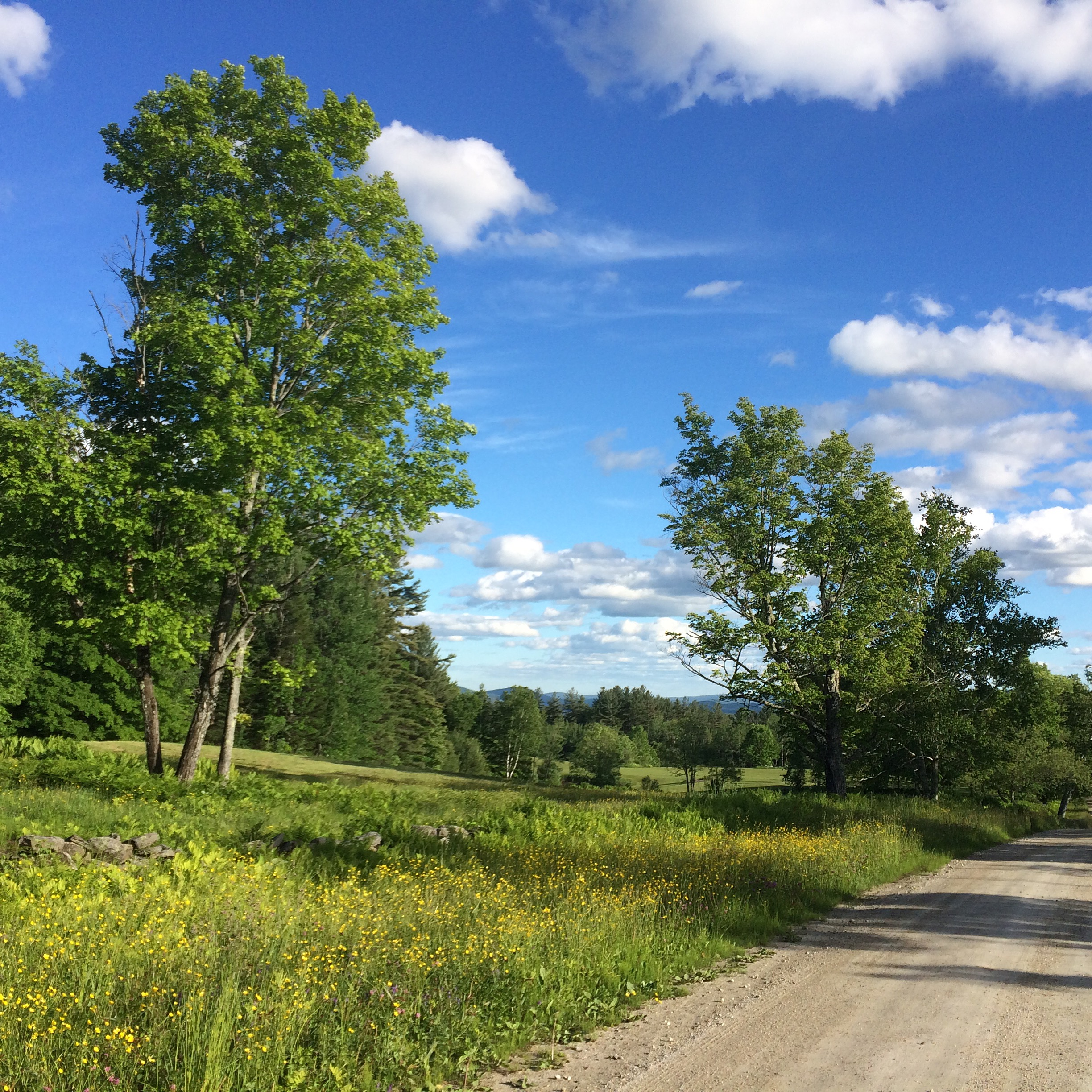 Cody Road in Landgrove Offer Beautiful Summer Views