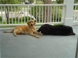 Rebecca's Dogs