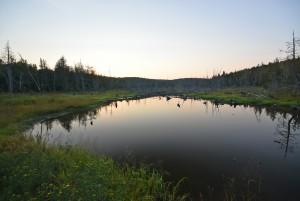 Beaver Pond