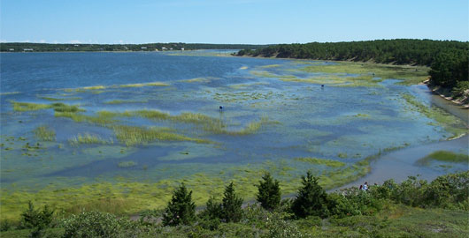 Wellfleet Marsh