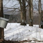 Vermont Maple Sap Buckets