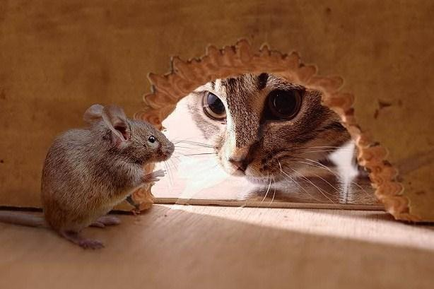 Cat-and-Mouse-1