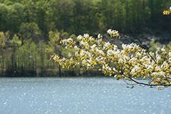 Lake Waramaug in Connecticut
