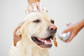 Doggie Daycare VT