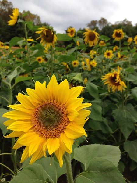Asheville Flower Farm