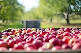 Asheville Fresh Apples