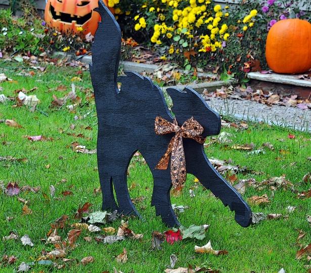 Asheville Halloween Cat