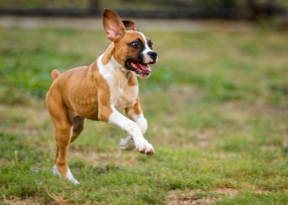 Dog Kennel Asheville