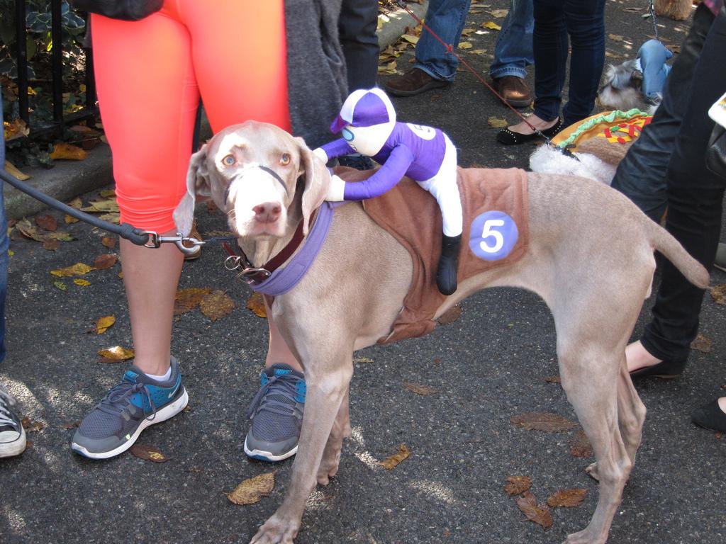 Halloween Dog Asheville