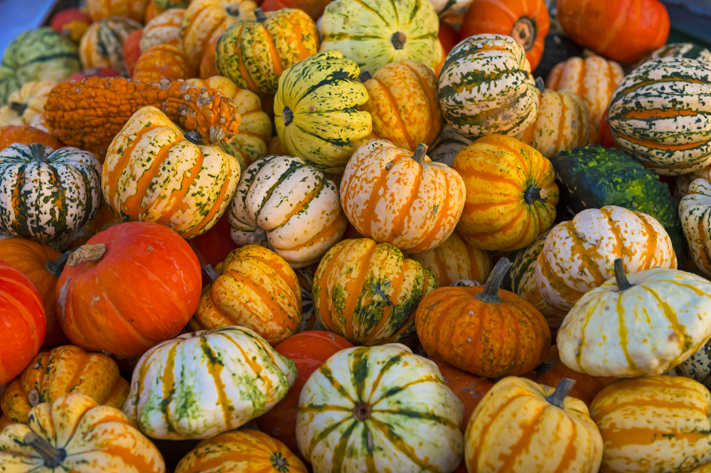 Pumpkins Asheville