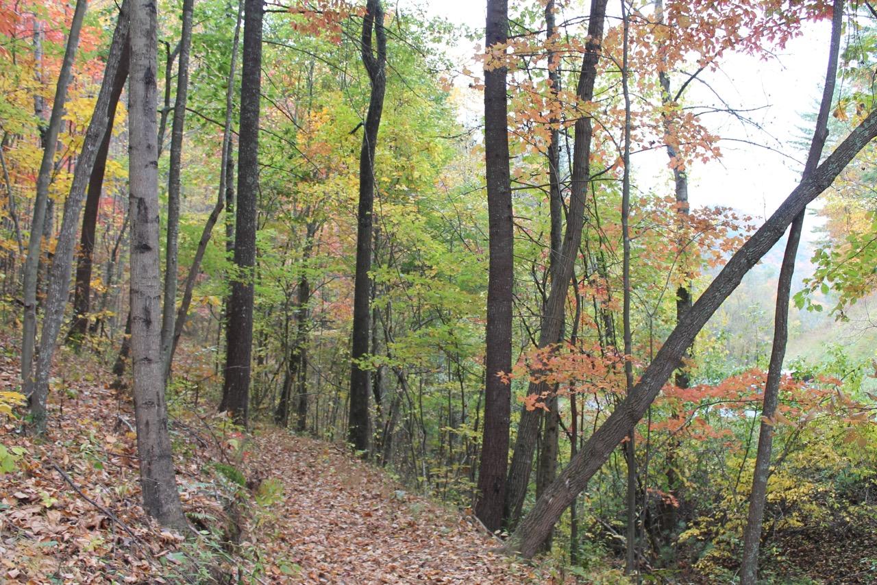 Walking Trails in Asheville