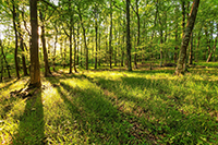 A forest with sun shining through trees - MA Land for Sale