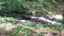 Home with a Stream