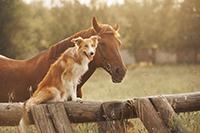 Upper Valley Horse Properties
