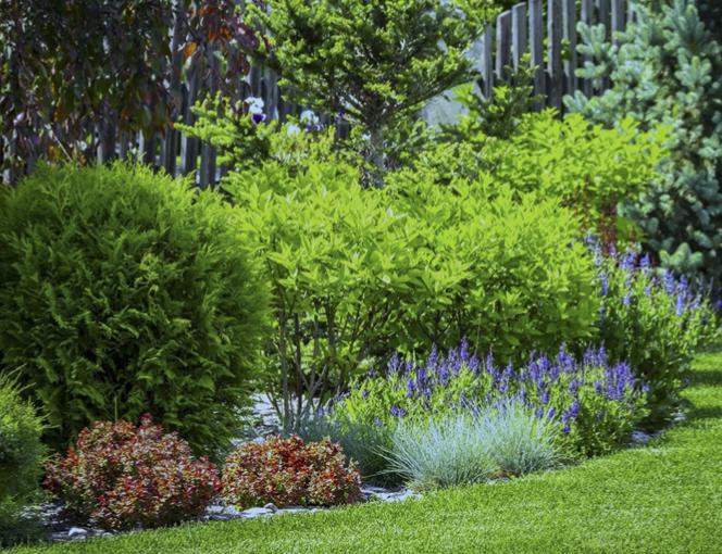bushes and flower garden