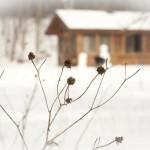cabin-173579_1280