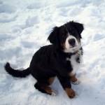 snow-213948_640