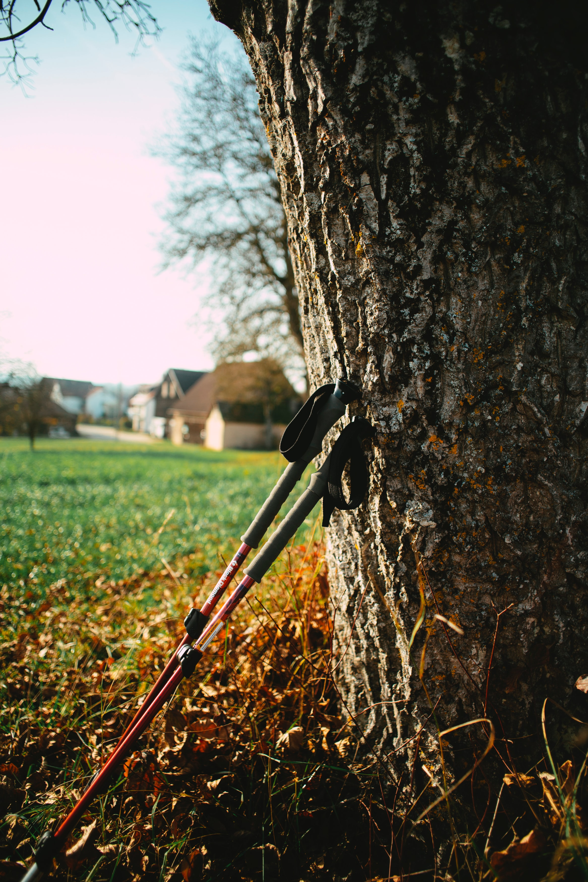 walking-for-weight-loss-nordic-walking-poles