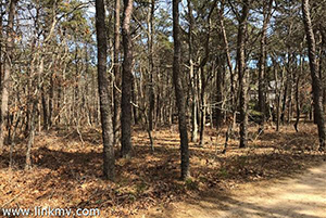 Land for Sale in Oak Bluffs MA