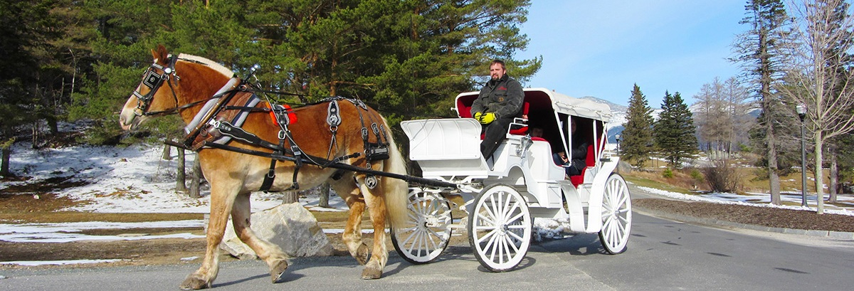 Carriage Rides at Bretton Woods, NH
