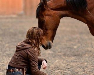 Human Horse Balance North Conway, NH