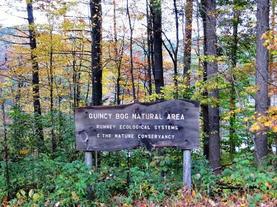 Quincy Bog Natrual Trail, Rumney, NH