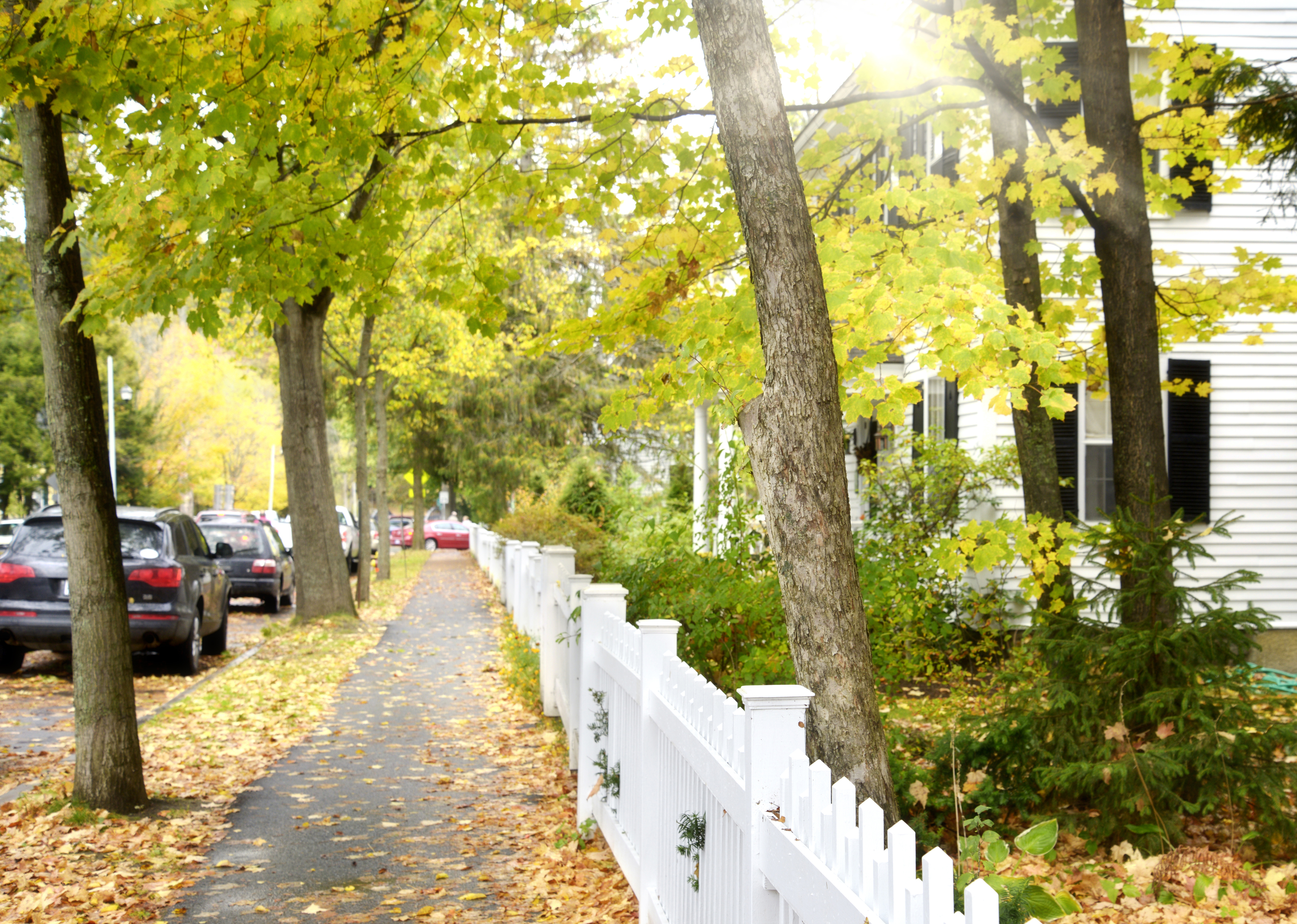 Woodstock VT - tree lined street