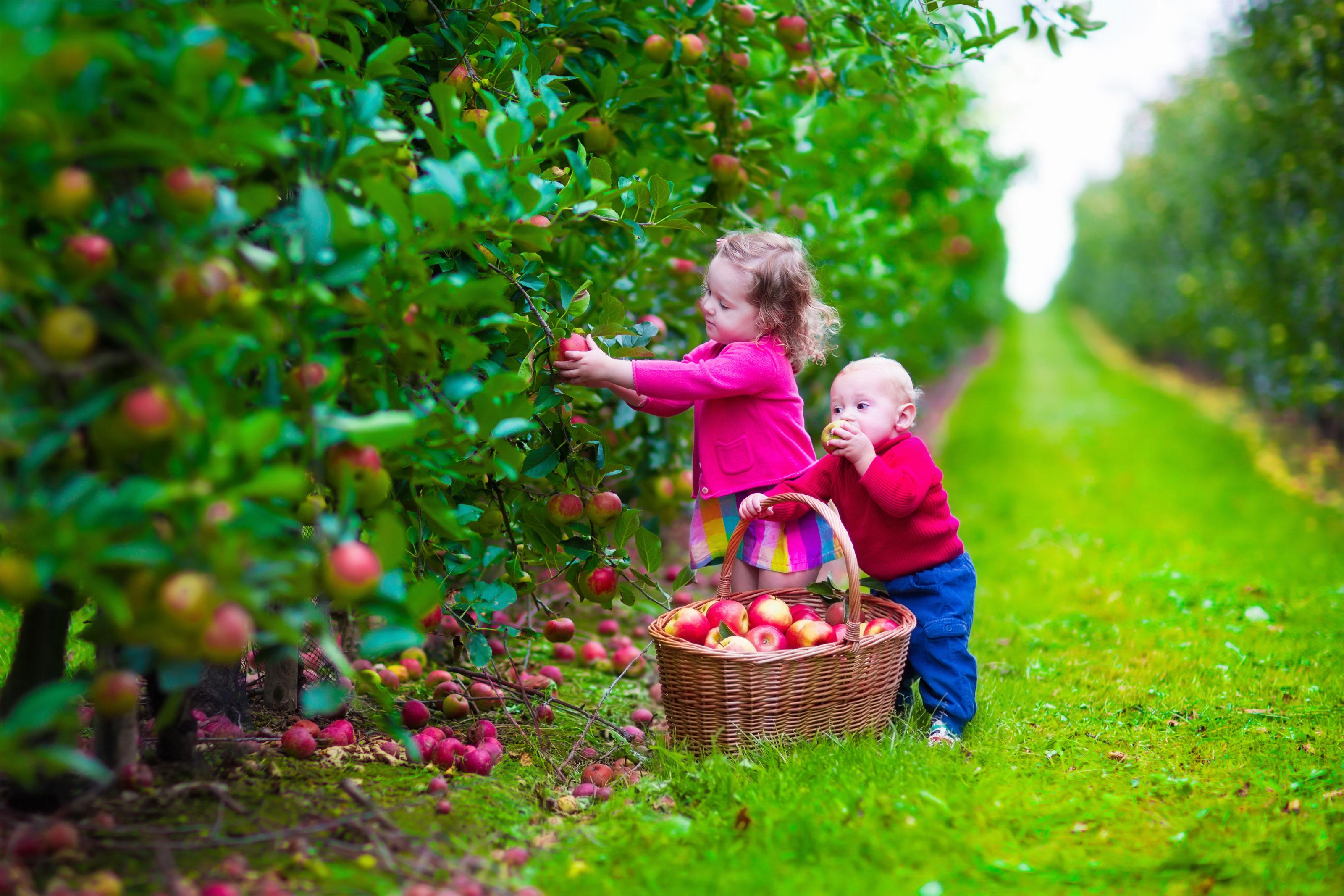 Children Picking Apples in Autumn