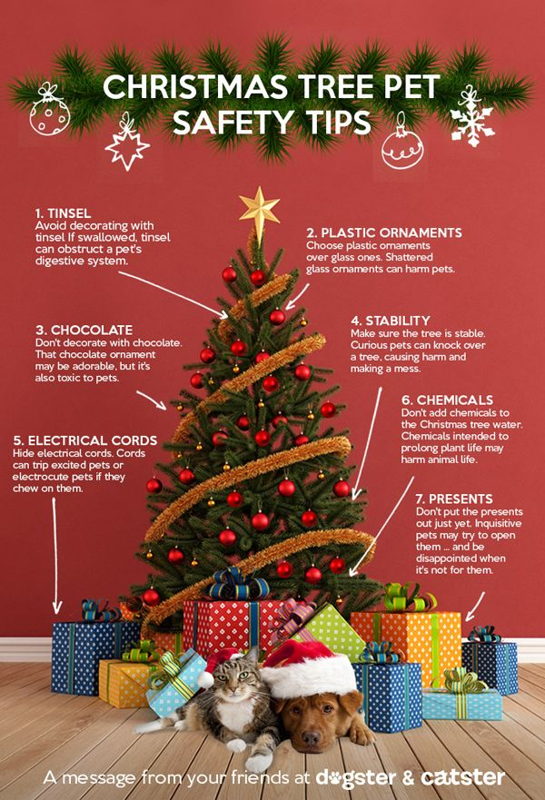 christmas tree pet safety tips - When Is Christmas Over
