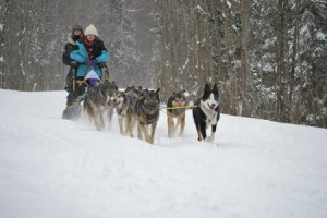 winter_sled_web