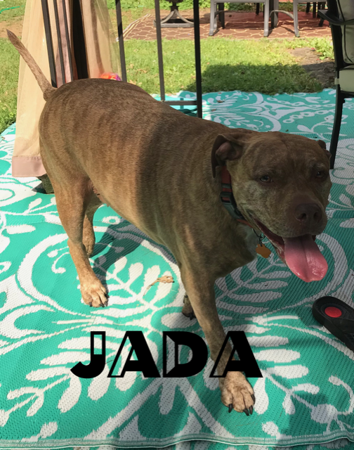 Jada the dog