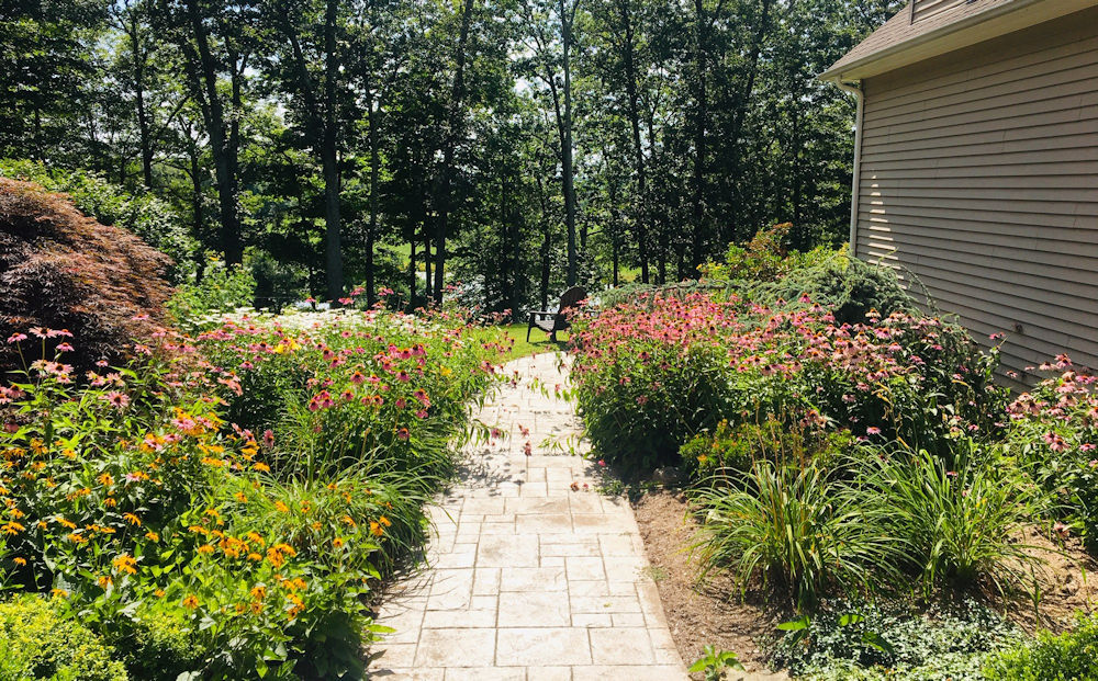Echinacea garden in Ashford CT